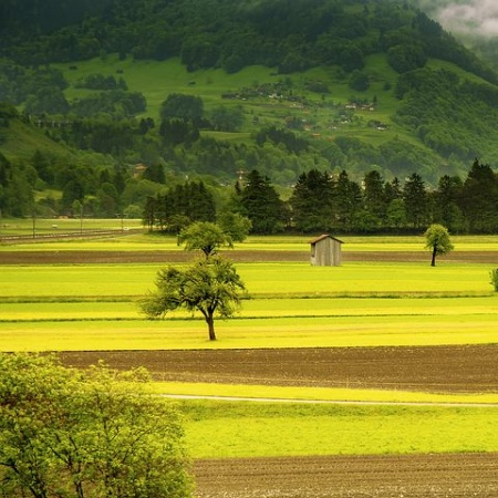 Explore This Beautiful Whatsapp Dp Of Vast Green Fields With
