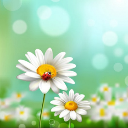 Beautiful Nature White Flower Dp Mirchistatus