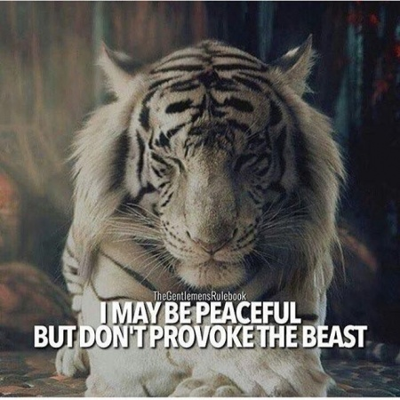 High Attitude Whatsapp Dp Choice With Royal Lion And Motivational Quotes Mirchistatus