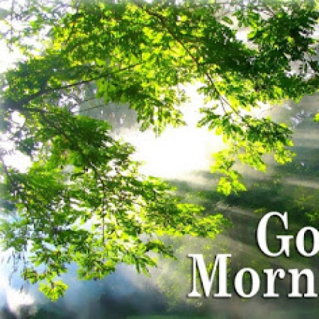Good Morning Nature Dp Image For Whatsapp And Facebook
